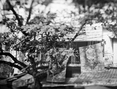 Under Tree (Le Tran Hau Anh) Tags: epsonv700 graflexcrowngraphic4x5 konicaxrayfilm caltar210f56