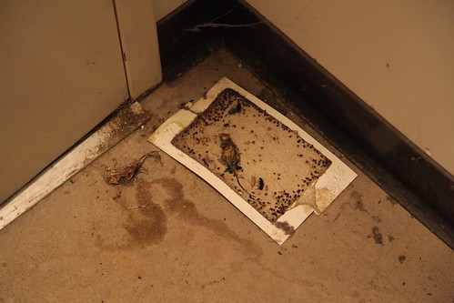 Dead rats and flies in the elevator motor room