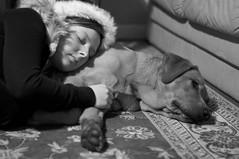 cody and kirsty (Kayleigh McCallum) Tags: uk boy red people dog pets cute art nature hat animal puppy photography scotland blackwhite nikon labrador cody santahat mammals kirsty 2011 foxredlabrador