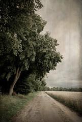 / \ (=Я|Rod=) Tags: wood landscape cornfield cloudy path explore textures layers oaks landschaft wald 340 sittensen nikond80 nikon1685vr distressedjewell