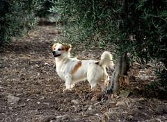 Sultan (JLCB PHOTO) Tags: gatos campo perros