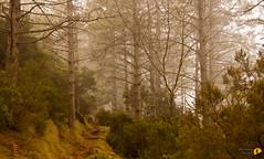 Monte Perone / Calanche - 6814 (Roberto Miliani / Ginepro) Tags: sea fog trekking canon walking island eos elba mare hiking ile tuscany granite toscana nebbia elbe isola toskana pineta 500d camminare granito isoladelba parconazionale arcipelagotoscano