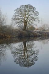 Tees Tree (Chris D2006) Tags: winter reflection tree water river yarm tees rivertees