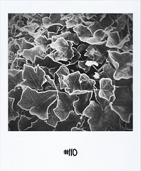 """#DailyPolaroid of 17-1-12 #110 • <a style=""""font-size:0.8em;"""" href=""""http://www.flickr.com/photos/47939785@N05/6744757007/"""" target=""""_blank"""">View on Flickr</a>"""