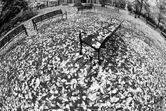 Autumn Planet - (B&W) (Ian Sane) Tags: park street city autumn bw white black leaves bench portland lens ian main 4th images fisheye madison planet avenue 3rd sane