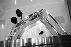 levels (kayun1) Tags: people blackandwhite hk holiday building digital square hongkong blackwhite high lomo long day alone afternoon phone shot empty snapshot central deep snap clean hong kong mf gr kowloon levels built density focusing grd streetsnap grd4 grdiv
