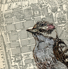 Downy Woodpecker (our thomas) Tags: bird ink watercolor sketch woodpecker downywoodpecker map drawing guide baedeker