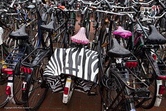 Zebra (Pieter Musterd) Tags: bicycle canon chaos nederland thenetherlands bicicleta denhaag bicycles zebra 5d paysbas thehague fahrrad fietsen chaostheory fiets vlos bicicletta zuidholland fietstas sgravenhage koninginjulianaplein  chaostheorie pietermusterd canon5dmarkii denhaag2018 fietsenstallng