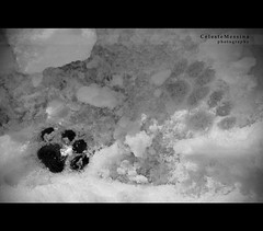 Miao orma (Celeste Messina) Tags: winter light bw white snow black art nature animal composition cat photo blackwhite nikon arte artistic postcard january trace natura bn card neve inverno gatto bianco nero footprint animale luce biancoenero cartolina gennaio composizione orma d5000