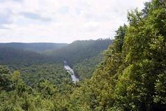 Arthur river (HAMACHI!) Tags: summer sky green forest river australia sumac tasmania eucalyptus ricoh a12 gxr 2011 arthurriver tarkine sumaclookout