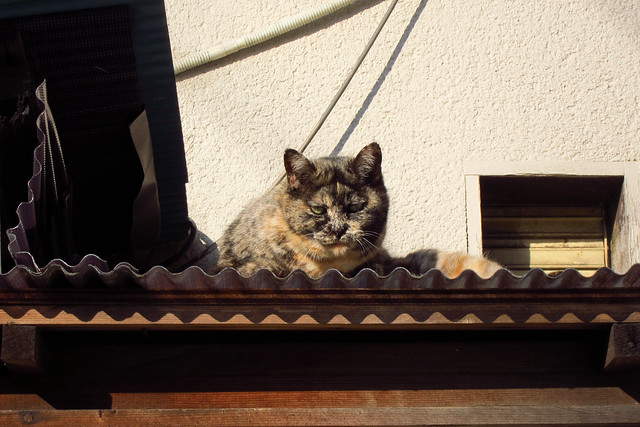 Today's Cat@2012-02-04