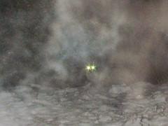 A fox in the snow (menten) Tags: snow canon eyes hiver powershot yeux fox neige chemin renard renaud s95 menten