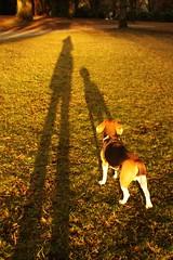 Kaiser and I (Kaiser the Beagle) Tags: shadow dog beagle digital canon eos 450d canonef28mmf18usm rebelxsi kissx2 eosdigitalrebelxsi eosdigitalrebelxsi450dkissx2 dailydogchallenge eosdigitalkissx2