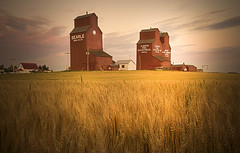 Searle (Lynette Jonson) Tags: autumn sunset red sky canada clouds wheat grain alberta grainelevator rowley searle