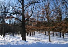 Buried picnic table (Larry the Biker) Tags: park winter snow cold oak woods picnic michigan picnictable stonycreekmetropark oaklandtownship