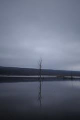 (eflon) Tags: lake tree water vertical dead stark vignetting monoish