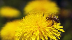 2016-05-07_03-55-38 (wiktor_furmaniak) Tags: flowers macro nature insect 50mm minolta sony passionphotography allnaturesparadise alpha65