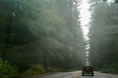 45470006 (danimyths) Tags: california trees mist film fog forest coast roadtrip pch redwood westcoast californiacoast filmphotography pacificcostalhighway