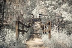 The Paint Creek Trail (Tom Hughes Photo) Tags: mill canon michigan infrared hoya r72 oaklandcounty paintcreek lakeorion rudds carpenterruddsmilldam