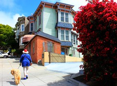 Strolling at Castro (Eduardo Ruiz M.) Tags: sanfrancisco california street dog flower building rose architecture outdoors spring castro