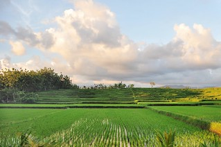 bali nord - indonesie 5