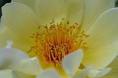 "Rosa L. ""Jacques Cartier"" (Sandra Kirly Pictures) Tags: flowers rose spring outdoor rosa poland warsaw botanicalgarden warszawa ogrdbotaniczny"