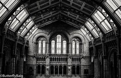 Hintze Hall.   #NaturalHistoryMuseum #NHM  #Museam #London #HintzeHall  #Architecture #Building #LightAndDark #Structure #CathedralStructure #Design #Window #Arches #Shapes #Stunning #Love #Throwback #OutAndAbout #London #BlackAndWhitePhotography #Mono (Sarwat Baig) Tags: building london love window architecture mono design shapes arches structure stunning naturalhistorymuseum outandabout nhm throwback museam lightanddark blackandwhitephotography cathedralstructure hintzehall