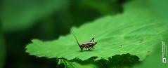 #Waldlebewesen  #pfadderbaumgiganten (Tubus112) Tags: outdoor sommer makro landschaft 2016 tierfotografie tierwelt makrofotografie blumenundpflanzen kteinsatzfotografie daskleinefotostudio