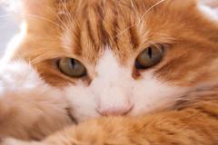 my Bastet (Explored 14/7/2016) (laura volpe) Tags: cats pets animal cat eyes feline sguardo felini gatto gatti