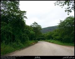 Nashib, Salalah, Dhofar (Shanfari.net) Tags: green nature season lumix raw natural panasonic vegetation greenery lush oman fz zufar rw2 salalah sultanate sarb dhofar  khareef    dufar      dhufar governorate dofar fz38 fz35 dmcfz35