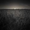 Doorway (~ superboo ~ [busy busy]) Tags: door field grass clouds reeds frame portal marsh alviso entry tiltshift