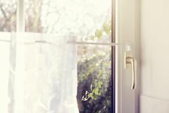 Sunday love (Maegondo) Tags: light sun window kitchen field backlight canon germany bayern deutschland bavaria mood dof bokeh 14 sunday sigma lensflare depth cosy schrfentiefe ingolstadt 30mm eos550d