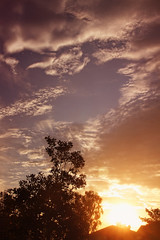 Sunset (Dar.shelle) Tags: california pink blue trees sunset orange house leaves clouds canon purple stevens 7d darshelle