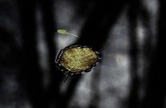 Leaves on the Water (Greg Webb) Tags: autumn black fall water leaves dark canal drop oily inky