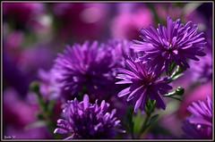 IMG_6148 (guidoio (Guido Granara)) Tags: flickrduel