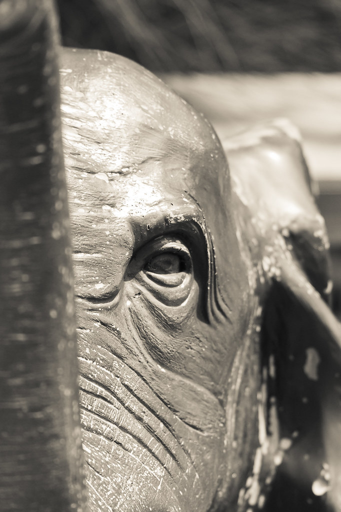 6484819609 d8e32aa5b1 b Elephant Eye