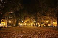 """""""คืนคำ่ใจกลางหมู่ไม้ในเมือง"""" Night in Park Portland,OR 12/2011"""