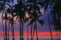 Palms at Sunset - Hawaii (~ Floydian ~ ) Tags: ocean park trees sunset usa cloud sun color tree tourism water colors clouds america canon palms landscape island lights hawaii big warm long exposure view state pacific dusk postcard smooth romance palm palmtrees national palmtree postcards historical states bigisland 50 viewpoint meijer henk puuhonua honaunau warmcolours hawaii50 floydian proframe proframephotography canoneos1dsmarkiii henkmeijer