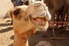 auguri 2011-12 (chiar@s.) Tags: chiaras auguri natale2011 merrychristmas happynewyear camel smile lovelyflickr