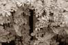 infrared pinhole DSC_8414x