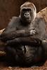 What do you suggest? (Terry Demczuk) Tags: ontario canada canon eos gorilla xs torontozoo terrydemczuk zoologicodetoronto