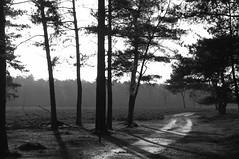 Wezepsche Heide (RM Photographs) Tags: veluwe nikon55200 nikond90