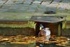 Staying at home! (XavierParis) Tags: paris water canal duck reflex agua nikon eau reflet pato reflejo xavier reflexion xavi reflexo canard reflexión hernandez canalsaintmartin colvert iberica 75010 reflexão 10èmearrondissement reflexió d700 xavierhernandez xyber75 xavierhernandeziberica