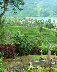view of the dead (helzway) Tags: landscape scenery graves teaplantation