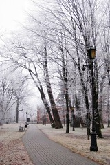 frosty day (green_lover) Tags: park trees winter lamp path hoarfrost poland yrardw