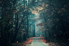 aesthetics (ewitsoe) Tags: park autumn trees lake color fall leaves fog forest 50mm nikon europe alone path walk poland autumnal d80 swarzedz