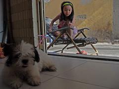Saigon. La fillette et le chien (gilmarcil) Tags: dog chien girl kids children child vietnam enfant fille saigon hochiminhcity gilles hcmc hochiminh fillette marcil hcmv hochiminhville