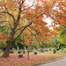 Autumn Colours at Mount Pleasant Cemetery