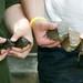 Selection of Aquatic Turtles