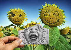 Pencil Vs Camera - 62 (Ben Heine) Tags: life family famille baby flower art love nature fleur face childhood composition paper photography parents graphicdesign sketch leaf petals scary stem poem hand arte drawing mixed
